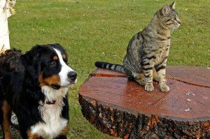 pet estate planning