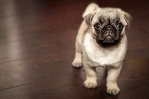 pet trust or pet protection agreement