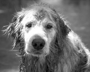 disaster planning in your pet estate plan